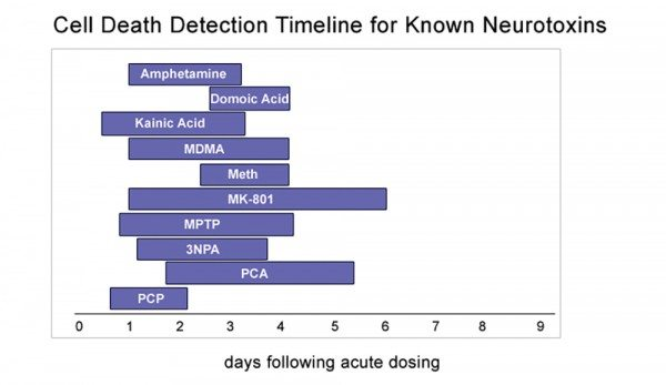 cell death detection timeline